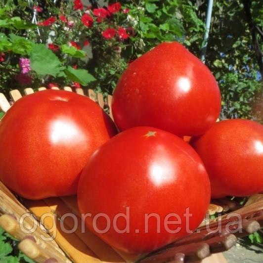 Чимган F1 насіння томату високорослого Clause Франція 250 шт