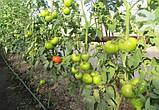 Чимган F1 семена томата высокорослого Clause Франция 250 шт, фото 3