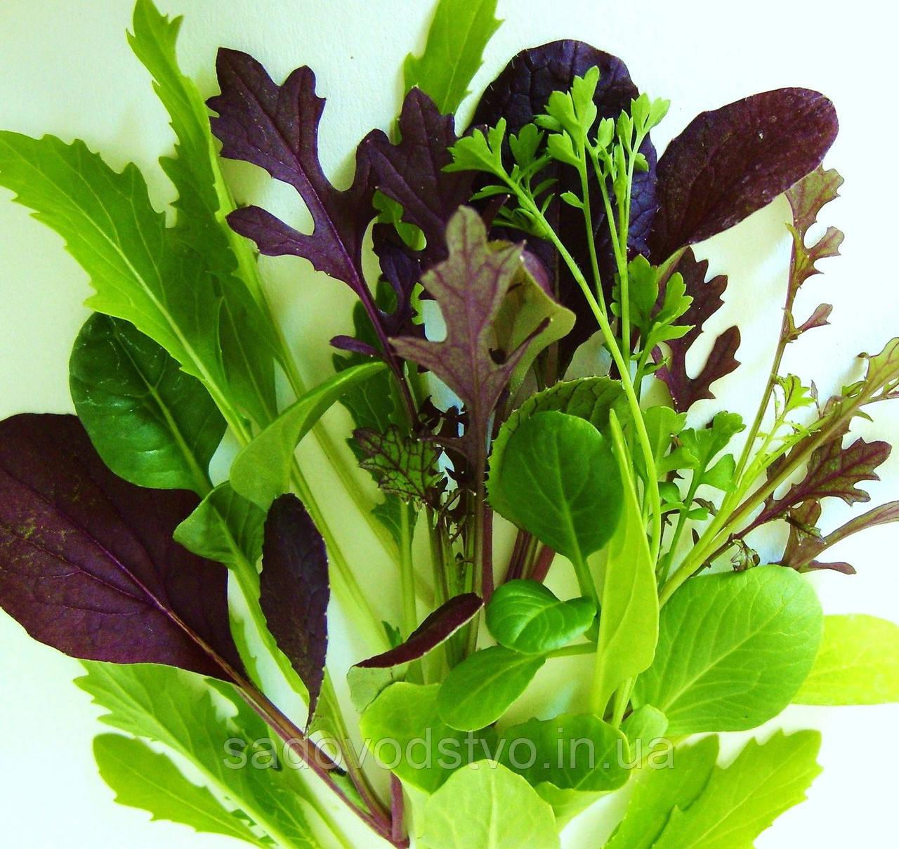 Пряный салат  Mesclun MIKS (летний)
