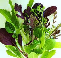 Пряный салат  Mesclun MIKS (летний), фото 1