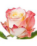 """Глицериновое мыло ручной работы """"Роза со свечой""""., фото 5"""