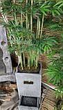 Декоративный фонтан Тумба, фото 4