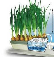 Вазон для выращивания лука Луковое счастье