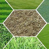 Как правильно выбрать и где купить газонную траву?