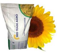 Семена подсолнечника устойчивые к гранстару НС Х 7370 Нови-Сад (Екстра), гібрид насіння соняшнику під гранстар