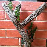 Фон для террариума - кирпичи с корягой, фото 2