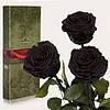 Три долгосвежих розы Черный Бриллиант 5 карат на коротком