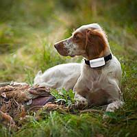 GPS ошейник для охотничьих собак TKSTAR TK909