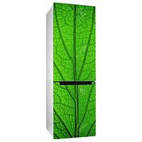 Виниловая наклейка на холодильник Зеленый лист дерева (пленка самоклеющаяся фотопечать на мебель макро трава)