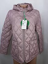 """""""Яблоко""""-демисезонная куртка Модель -8171В ( пудра,48,50,52,54,56), ( графит 48,50,52,54, 56), фото 3"""