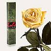 Долгосвежая роза Желтый Топаз 7 карат (средний стебель)