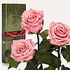 Три долгосвежих розы Розовый Кварц 5 карат (средний стебель)