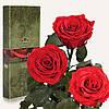 Три долгосвежих розы Красный Рубин 7 карат (средний стебель)