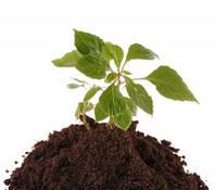 Купить грунт растительный Киев
