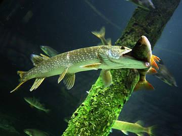 Рыболовные термины  (слэнг).
