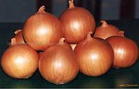 Купить Семена лука репчатого Мундо