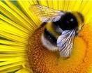 Що означають мертві бджоли після зимівлі. Миші у вулику.
