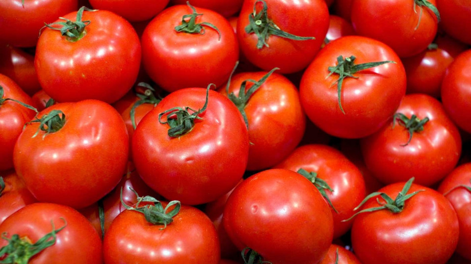 Купить Семена томата Бобкат F1