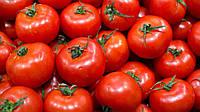 Семена томата Бобкат F1