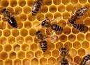 Прослуховування бджіл. Поведінка бджіл в лютому.