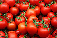 Купить Семена томата Фортікс F1