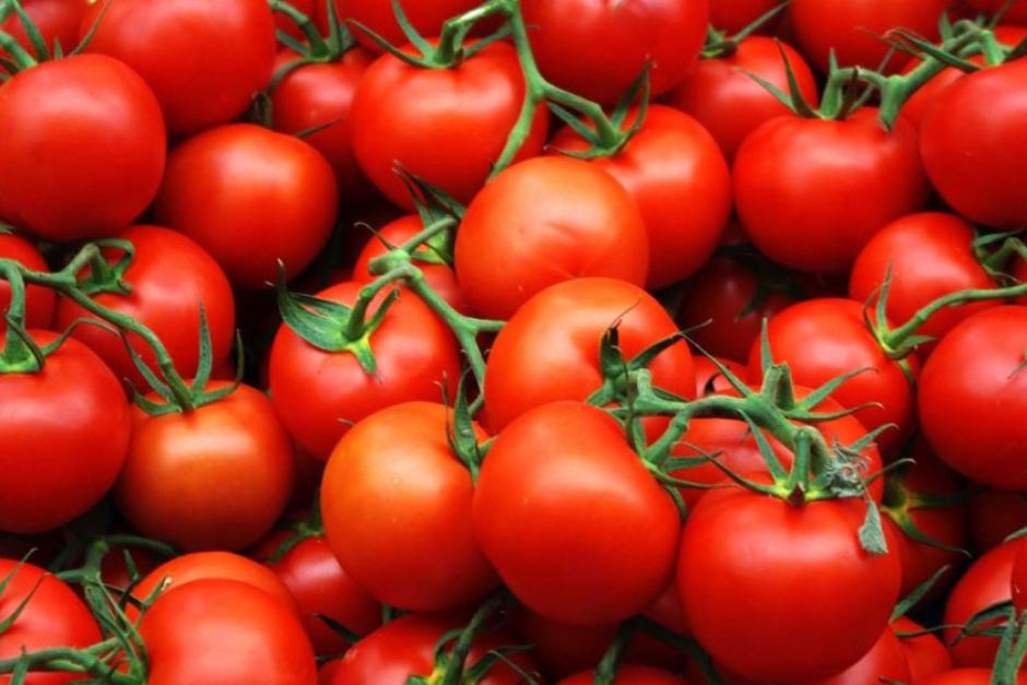 Купить Семена томата Терра Котта F1