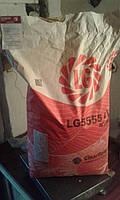 Cоняшник ЛГ 5555, він має масу переваг і підходить для вирощування в посушливих областях країни.