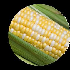 Семена Кукуруза сахарная Мраморная F1 50г Мнагор 2600