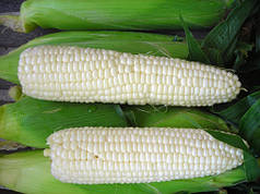 Семена Кукуруза сахарная Андреевский F1 50 г Мнагор 2601