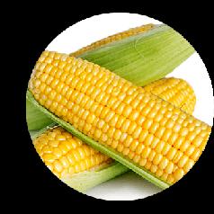 Семена Кукуруза сахарная Веге-1 F1 50 г Мнагор 2599