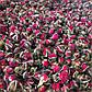 Роза бутони на вагу, сушені бутони троянд, засушена троянда бутони, бутони чайної троянди, чайна троянда, фото 7