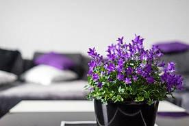 Штучні квіти в будинку: чому ними варто прикрасити оселю?