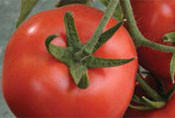 Купить Семена томата Мінарет F1