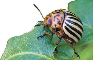 Інсектициди - засоби для боротьби з комахами.