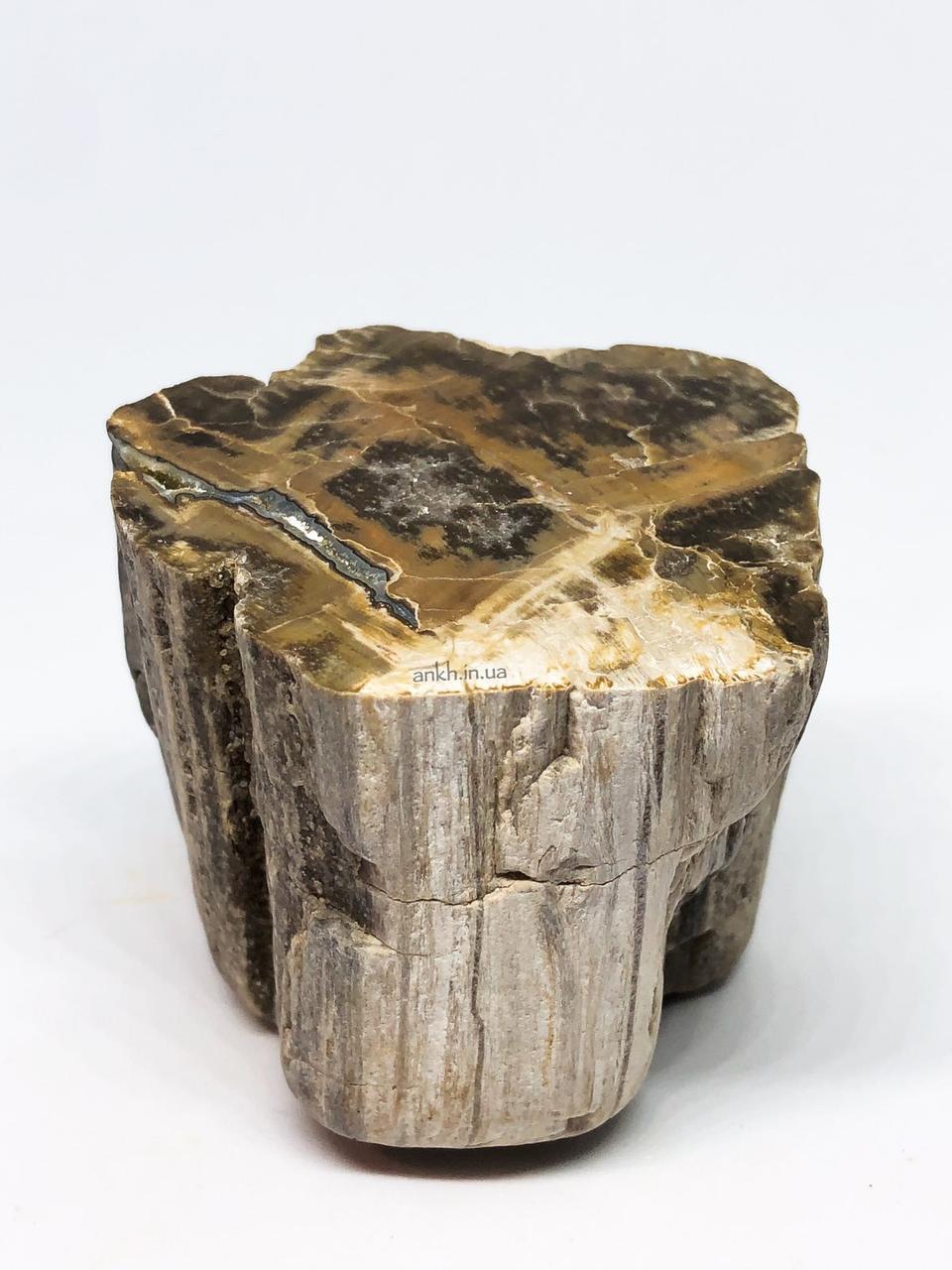 Окаменелое дерево (1), 261 г