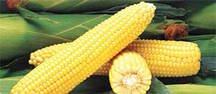 Семена сахарной кукурузы Світстар F1