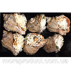 Рапан фаршированный в ракушке (ризотто из черноморских морепродуктов и грибов), 6 штук