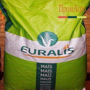 Семена кукурузы Euralis ЕС Фарадей ФАО 350 посевной гибрид кукурудзы Евралис ЕС Фарадей
