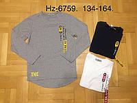Регланы для мальчиков оптом, размеры 134-164 р, Active Sports, арт. HZ-6759, фото 1