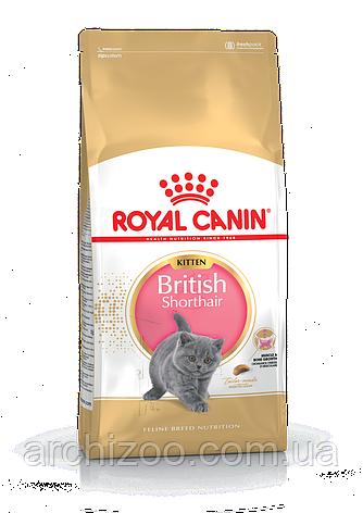 Royal Canin Kitten British Shorthair 10кг Роял Канин для котят британской короткошерстной до 12 месяцев, фото 2