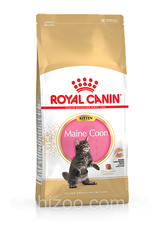 Royal Canin Maine Coon Kitten 4 кг для котят мейн кун, фото 2