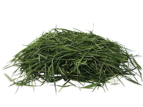 Насіння багаторічної злакової трави Нутріфайбр (суміш), фото 2