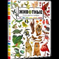 Животные Учим цвета и цифры Книга для развития детей