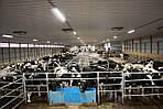 Освещение для животноводства