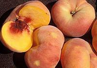 Сженцы персика СВИТ БАГЕЛ позднего срока (двухлетние)