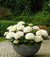 ВЕРОНА Вазон бетонный уличный, горшок для сада, дома и террасы VER4 - 600/300 вес - 36 кг., объем - 50 л.