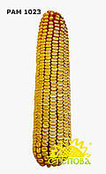 РАМ 1023 семена кукурузы ФАО 230