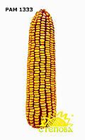 РАМ 1333 семена кукурузы ФАО 180