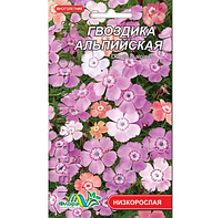 Гвоздика Альпийская, многолетнее растение, семена цветы 0.05г