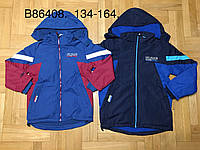 Куртки для мальчиков оптом, Grace, 134-164 р